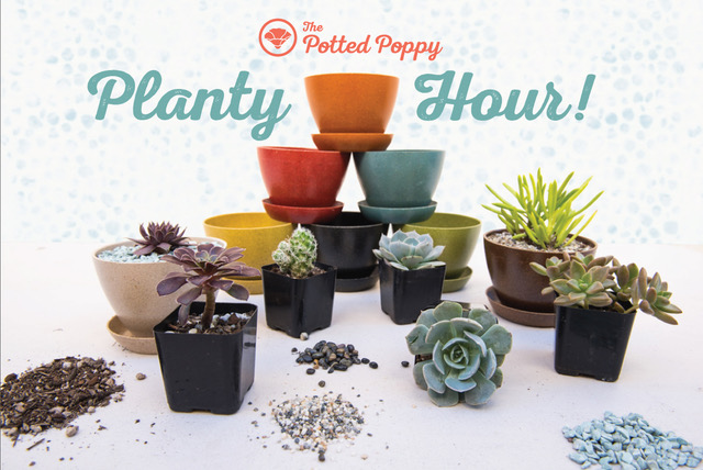 Planty Hour with the Potted Poppy
